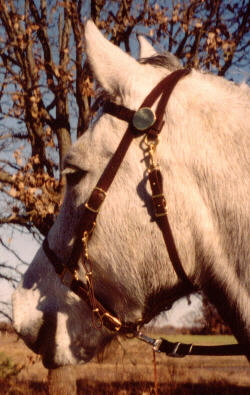 Brown Beta Halter Bridle