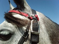 Clip on Browband and Bitstrap